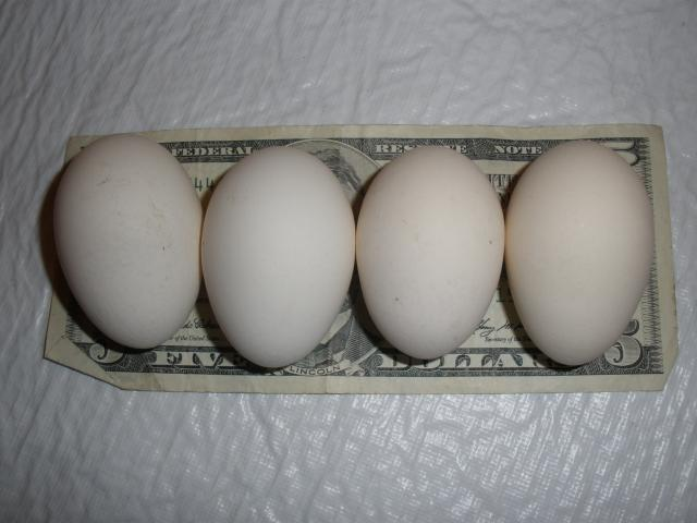 http://www.backyardchickens.com/forum/uploads/4439_sebright.jpg