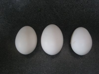 http://www.backyardchickens.com/forum/uploads/4439_sicilian_buttercup_eggs.jpg