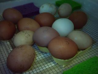 44573_eggs_1.jpg