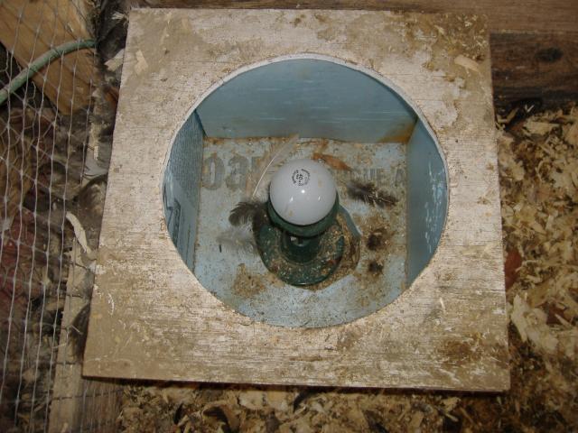 Murray McMurray Hatchery - No Freeze Heater Base