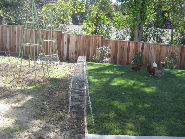 http://www.backyardchickens.com/forum/uploads/45693_img_0007.jpg