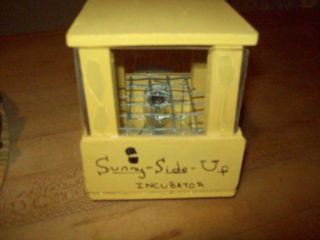 45995_sunny_side_up_incubator_011.jpg