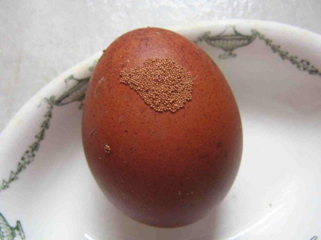 http://www.backyardchickens.com/forum/uploads/46039_marans_eggshell_abnormaility_low_res.jpg