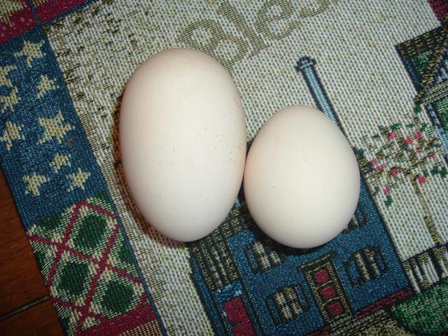 46124_biggest_egg_yet_003.jpg