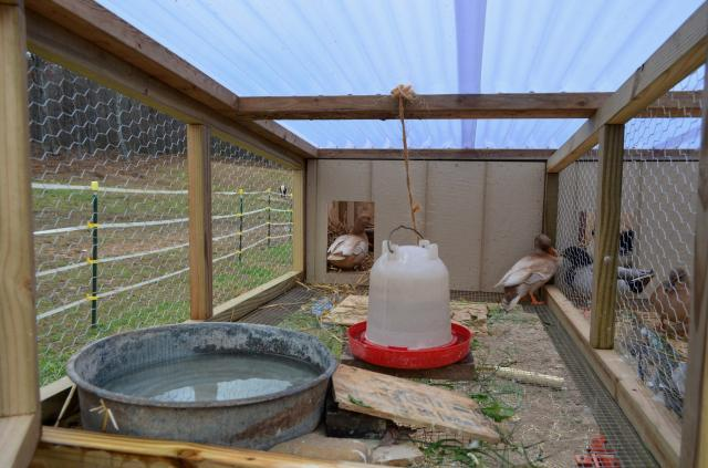 Call Duck Breeding http://www.backyardchickens.com/t/597638/our-new-winter-breeding-call-duck-pens