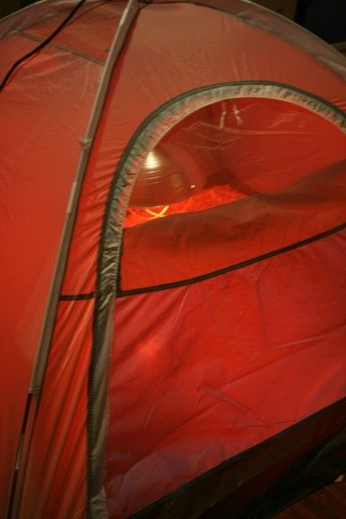 46776_chicks_tent1.jpg