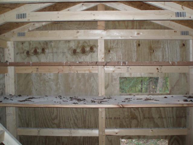 http://www.backyardchickens.com/forum/uploads/46815_05.jpg