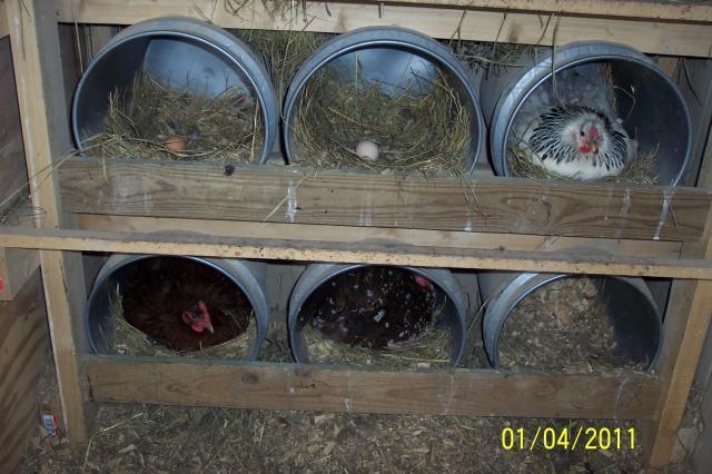 http://www.backyardchickens.com/forum/uploads/47243_100_6970.jpg