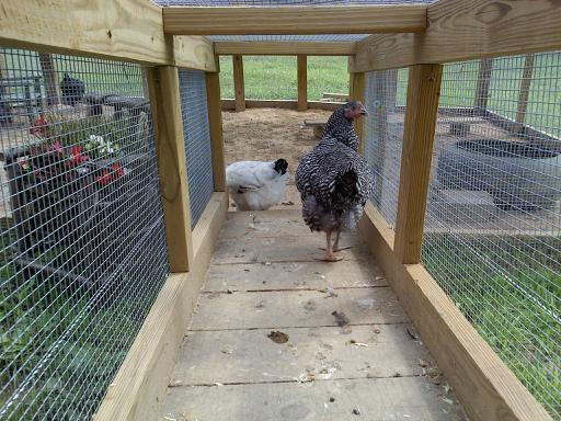 http://www.backyardchickens.com/forum/uploads/47585_tunnel_view_from_inside_coop.jpg
