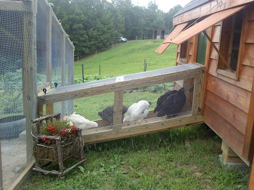 http://www.backyardchickens.com/forum/uploads/47585_tunnel_with_chickens_inside.jpg