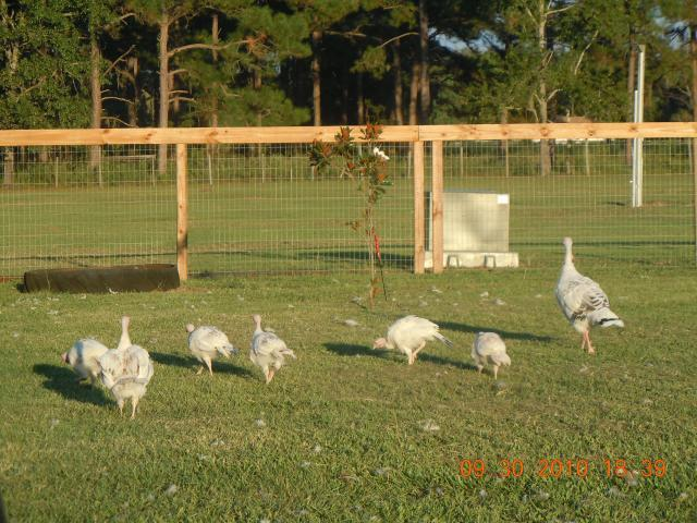 http://www.backyardchickens.com/forum/uploads/47603_alex_017.jpg