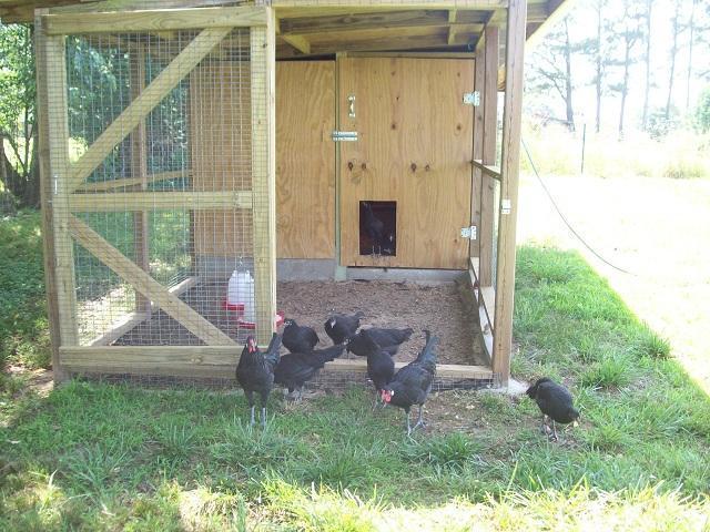 http://www.backyardchickens.com/forum/uploads/47708_0113.jpg