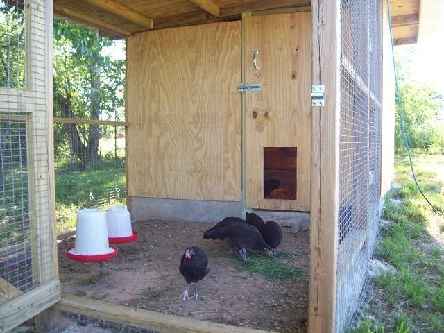 http://www.backyardchickens.com/forum/uploads/47708_093.jpg