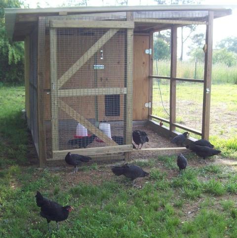 http://www.backyardchickens.com/forum/uploads/47708_096.jpg