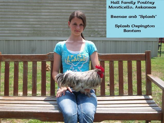http://www.backyardchickens.com/forum/uploads/47716_brenae_and_splash.jpg