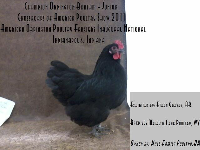 http://www.backyardchickens.com/forum/uploads/47716_champion_orp_bntm_jr_crossroads.jpg