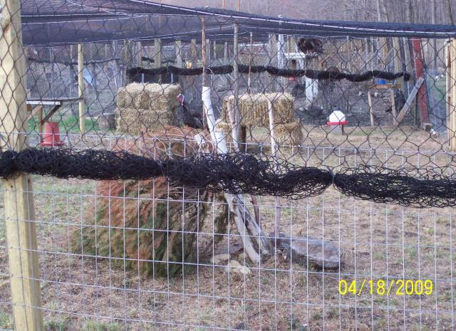 http://www.backyardchickens.com/forum/uploads/478_edwards_and_turkey_run_025.jpg
