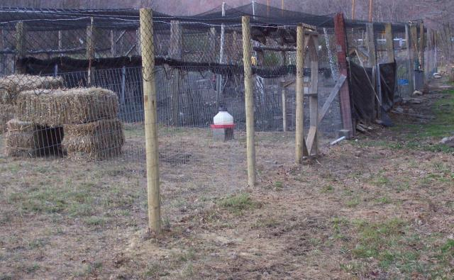 http://www.backyardchickens.com/forum/uploads/478_edwards_and_turkey_run_027.jpg