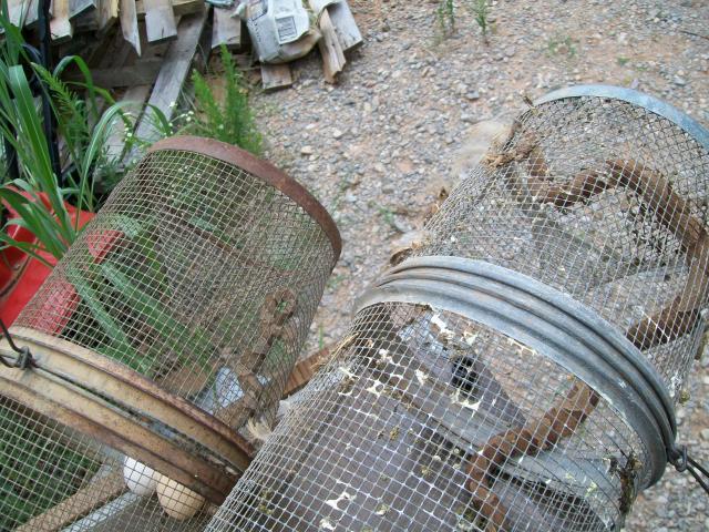 snake trap for pinterest