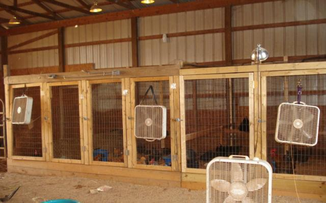 Exhibition Poultry Housing Backyard Chickens