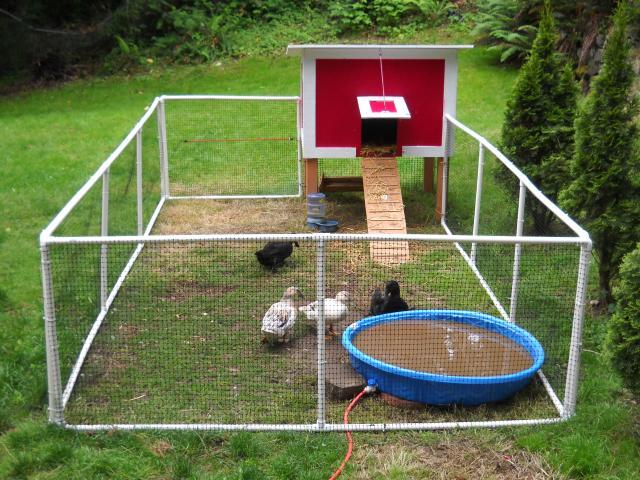 Lim yang chapter duck coop design plans for Duck hutch plans
