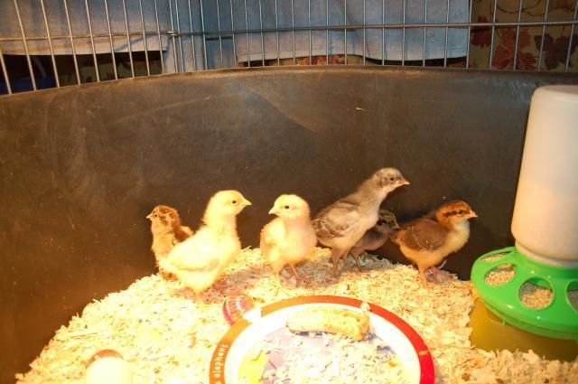 50662_the_flock.jpg