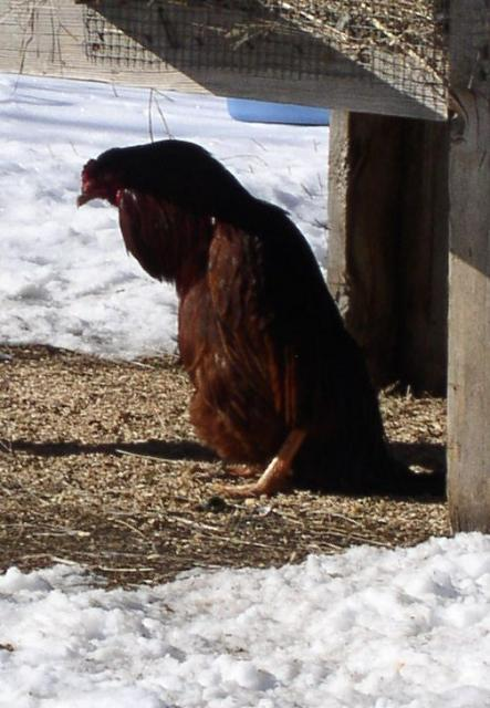 50716_penguin2.jpg