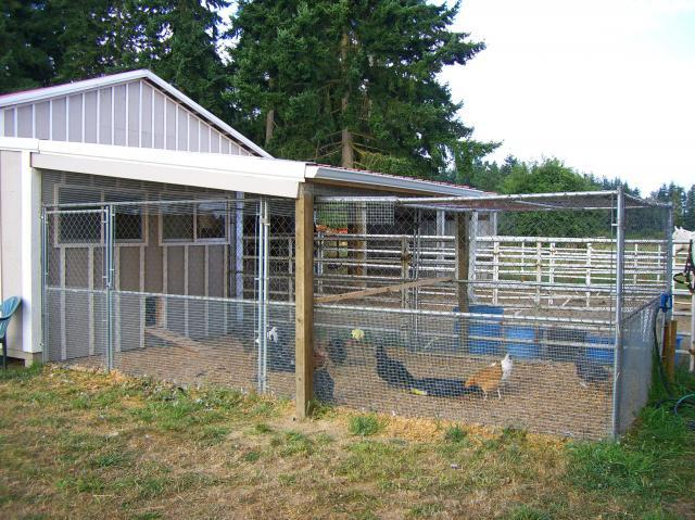 Chain Link Dog Kennel Panels Backyard Chickens