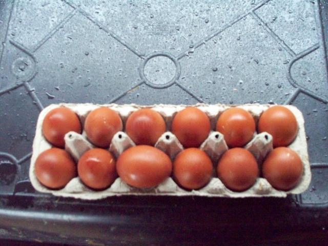 http://www.backyardchickens.com/forum/uploads/50801_december_bbs_marans_020.jpg