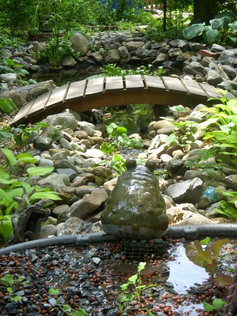 Backyard aquaponics view topic tilapia pond setup a for Garden pool tilapia