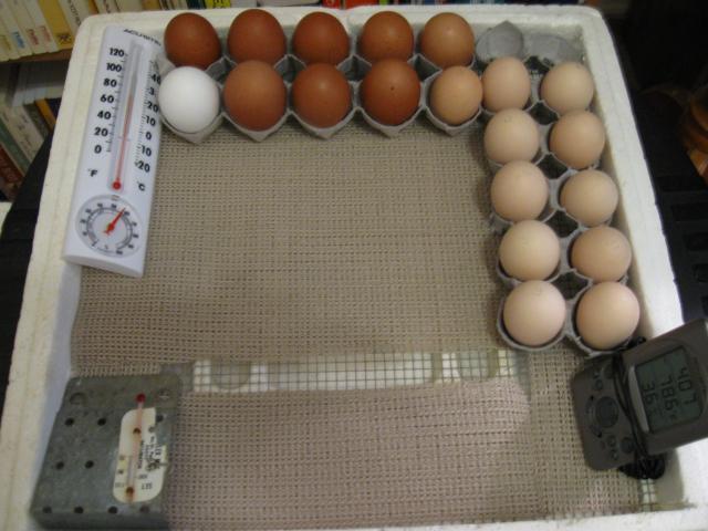http://www.backyardchickens.com/forum/uploads/51132_img_0190.jpg
