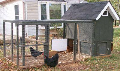 Coop De Ville Hennesse S Chicken Coop Tractor Backyard