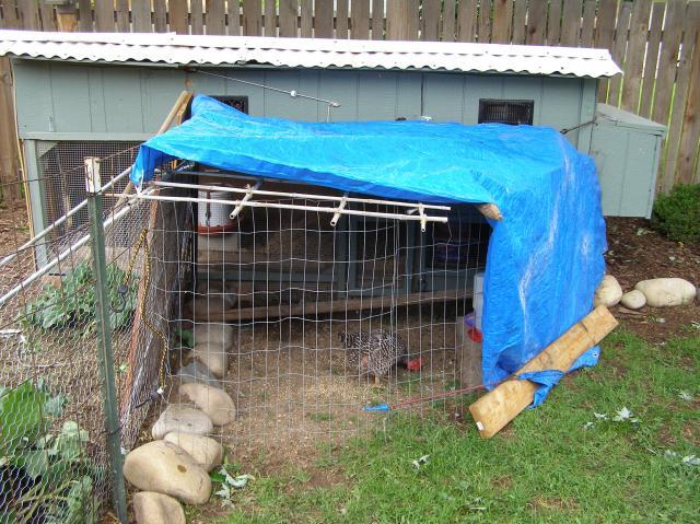http://www.backyardchickens.com/forum/uploads/52301_p5280001.jpg