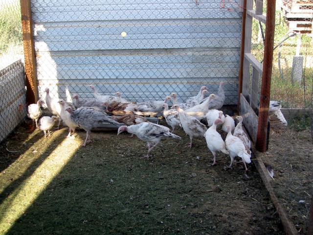 http://www.backyardchickens.com/forum/uploads/52541_img_0010.jpg