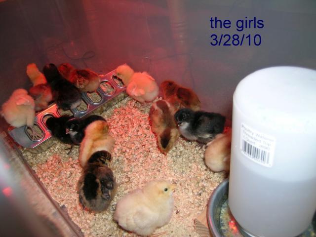 53112_march_28_2010_-_sixteen_babies.jpg
