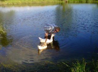 53790_swimming_geese_talking.jpg