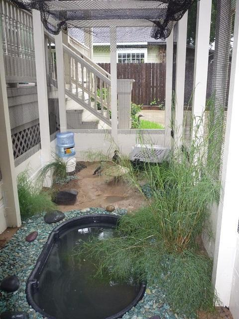 Diy Backyard Duck Pond : httpwwwbackyardchickenscomforumuploads54047p1000686xjpg