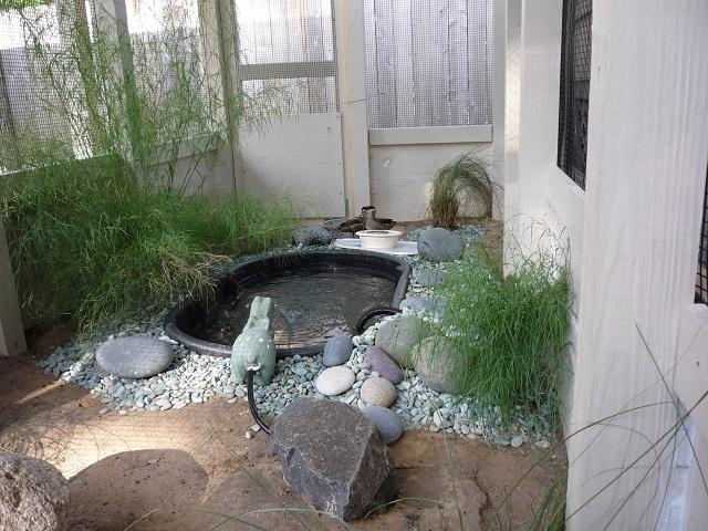 need some duck pond ideas backyard chickens