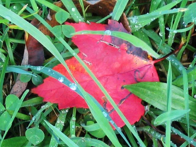 54076_fall_leaf_oct_2007_copy.jpg