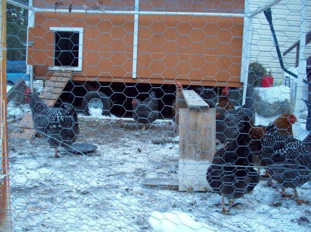http://www.backyardchickens.com/forum/uploads/54168_100_3477.jpg