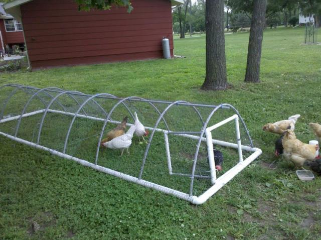 Chicken tractor backyard chickens for Pvc chicken tractor plans
