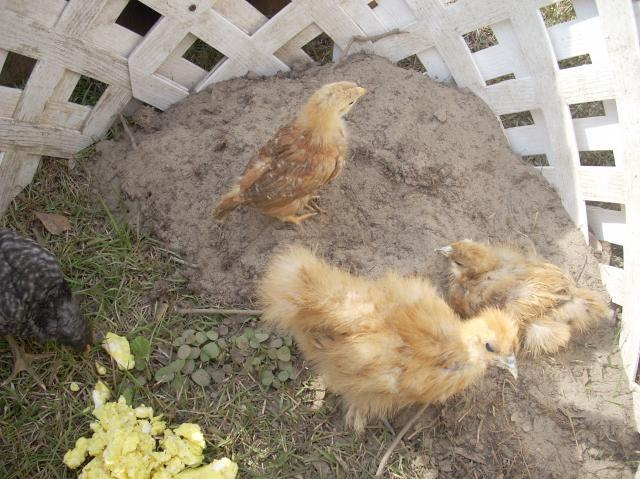 Jason9111 39 s chicken coop backyard chickens community - Craigslist little rock farm and garden ...