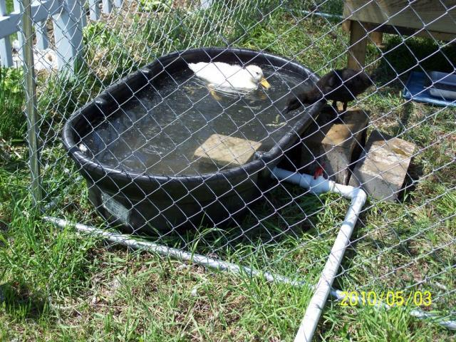Backyard duck pond for Duck pond filtration