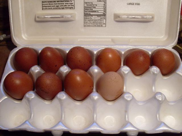 http://www.backyardchickens.com/forum/uploads/56168_odd_egg_1-24-11_002.jpg