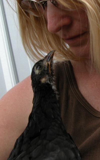 http://www.backyardchickens.com/forum/uploads/57171_dscn1917.jpg