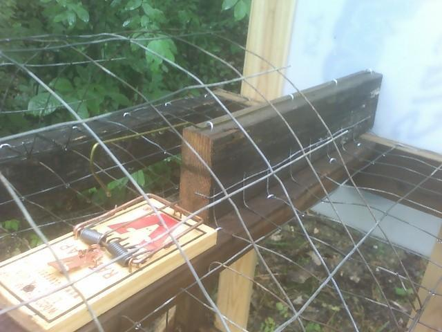 http://www.backyardchickens.com/forum/uploads/58362_trap3.jpg