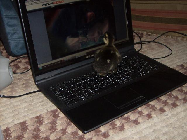 http://www.backyardchickens.com/forum/uploads/58401_hpim1074.jpg