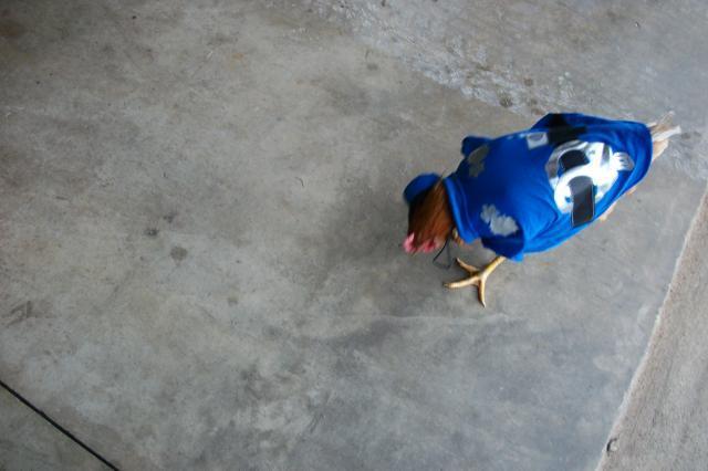 http://www.backyardchickens.com/forum/uploads/58585_birdncuda_087.jpg