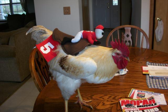 http://www.backyardchickens.com/forum/uploads/58585_birdncuda_099.jpg