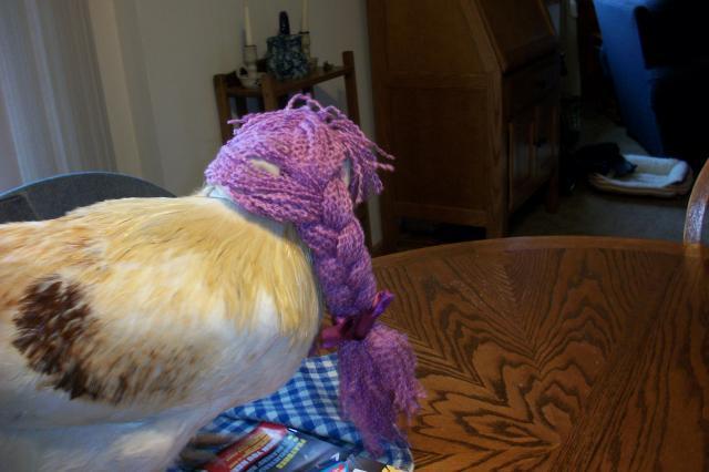 http://www.backyardchickens.com/forum/uploads/58585_birdncuda_102.jpg